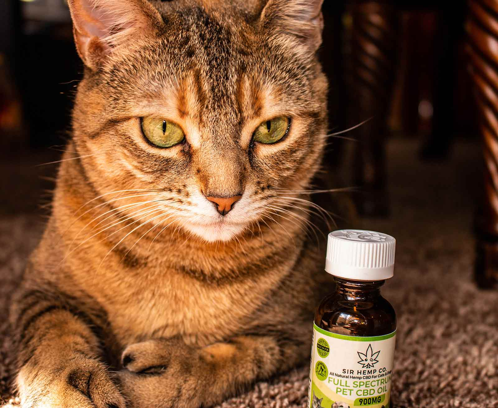 cbd for cats, cbd oil for cats, cbd for cats benefits, cbd for cats, anxiety